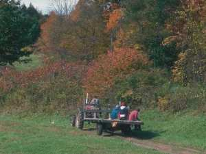 Tractor in fall field