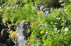 Naches wildflowers