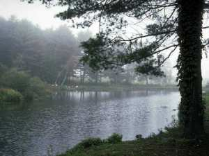 Misty lake, pine