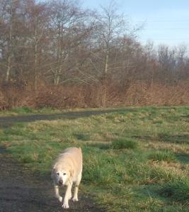 Dog marsh 1